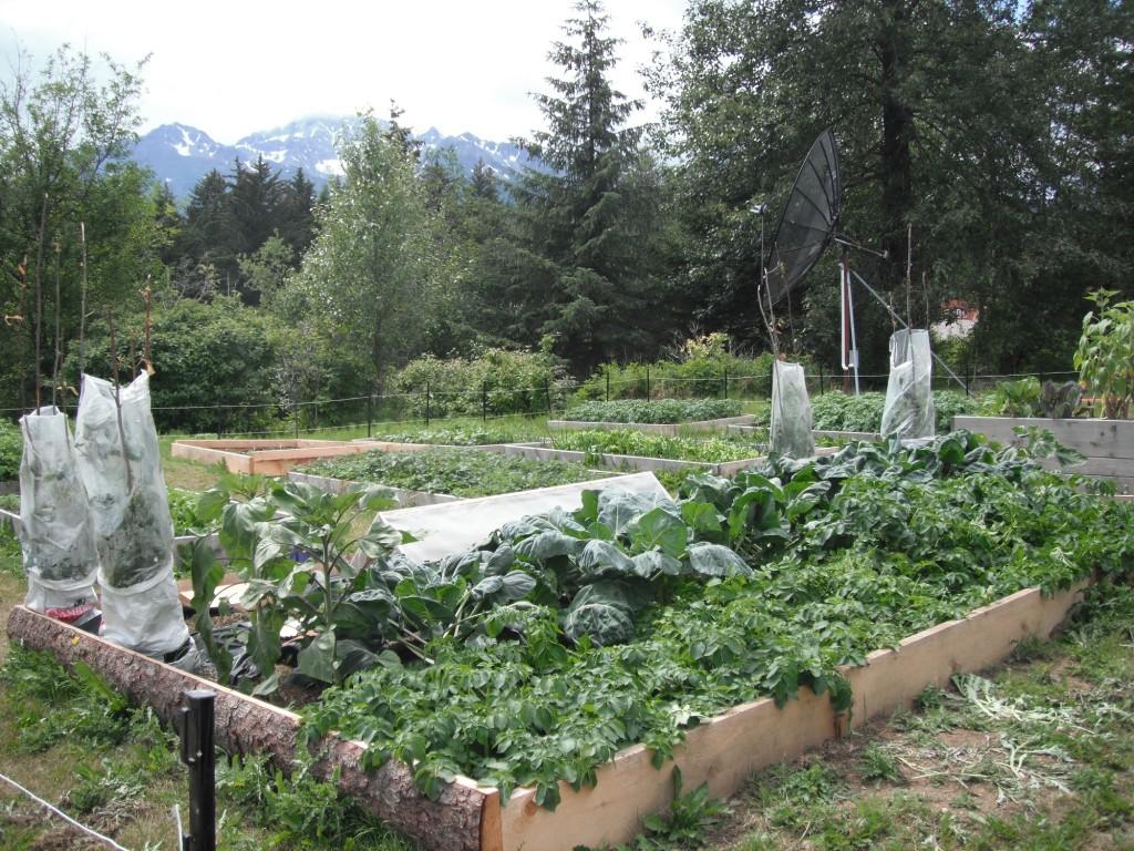 Haines garden 2